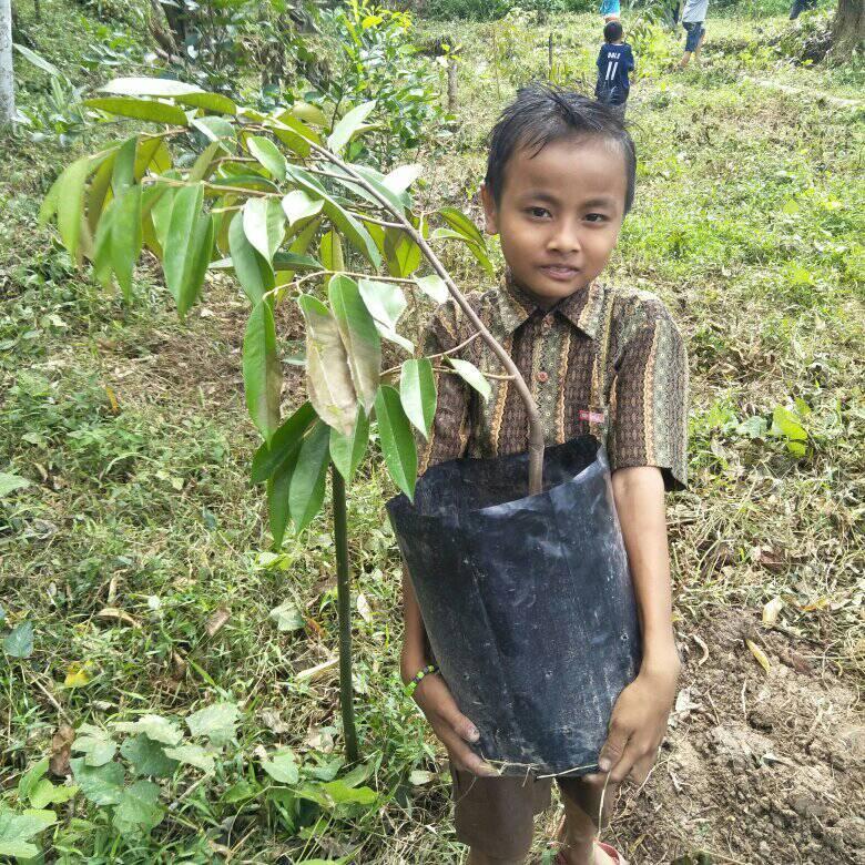Restore nature in Sumatra